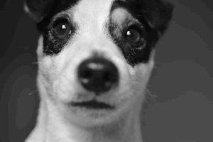 Dog_grooming_nearme_petgrooming_petsalon_nearme